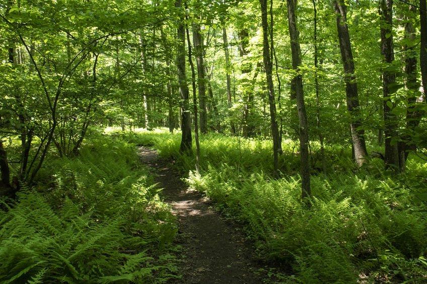 Appalachian Trail Pennsylvania